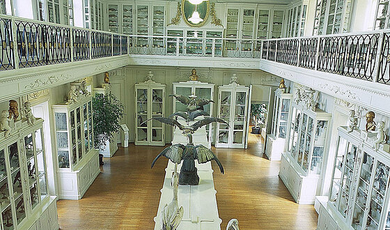 "The ""Vogelsaal"" of the Museum of Natural Science is considered to be one of Europe's most beautiful early classicist halls of a museum"